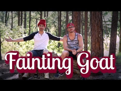 Got Wood | camping in Tonto National Forest | MATT AND BLUE