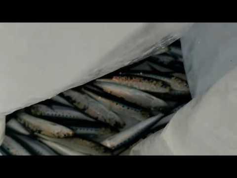 Ano ang gagawin kung ang mga uod sa herring litrato