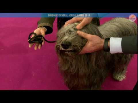 Voir la vidéo : Ring Canins du 28 février 2017, partie 1