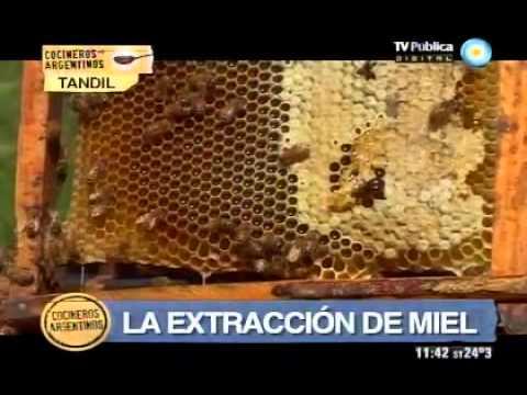 ¿Cómo se hace la miel?