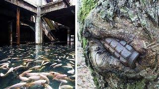 Dowody na to, że natura przejmuje kontrolę nad porzuconymi miejscami