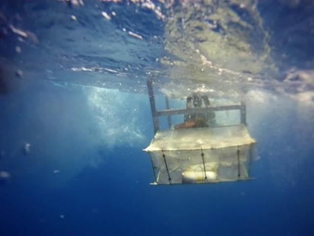 Самые глубоководные существа в мире теперь питаются пластиком