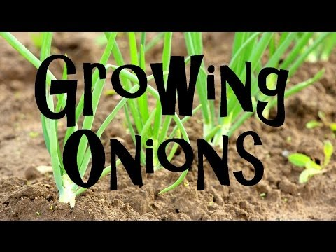 , title : 'How to Plant, Grow, & Harvest Onions from Start to Finish