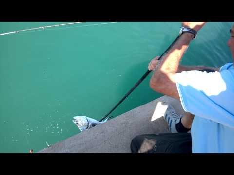 Caccia di film e pesca in video di Siberia