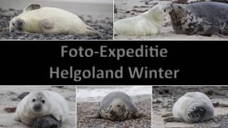 Cursus Natuurfotografie - foto-expeditie Helgoland winter (Duitsland)