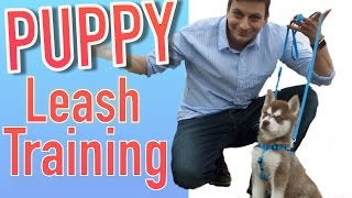 How to Train your NEW PUPPY to Walk on Leash!