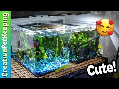 Betta Fish Retirement Tank | Fish Fan Friday Update