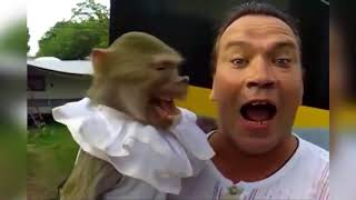 Самые смешные приколы про животных 2018