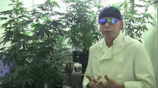 medical marijuana growing tips