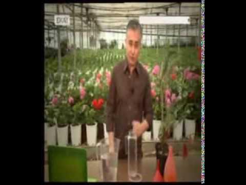 Αντιμετωπίστε οικολογικά τον κρεμμυδοφάγο - Κηπουρέματα - ΣΚΑΪ