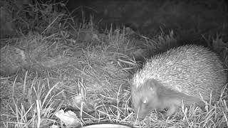 Wildlife Trail Camera - 19.5.2019