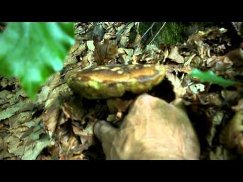 Come candeggiare ununghia da un fungo