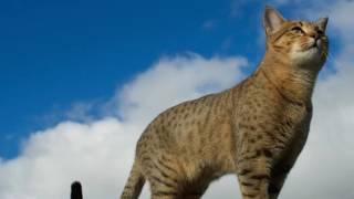 ТОП 10 Самые умные кошки