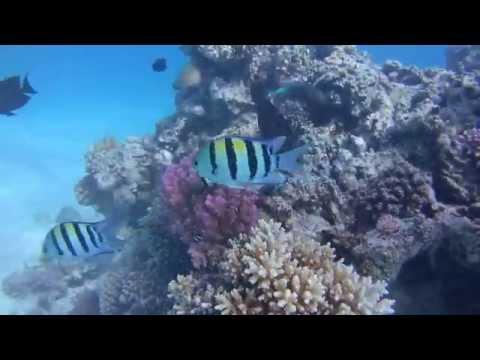 Tauchen im Roten Meer, Hurghada - allgemein,Ägypten