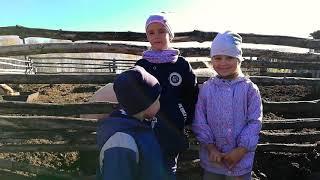#свинкапеппи#животные#челлендж/Свинки Пеппи кушают Часть 3. Челлендж  с ранетками/забавные хрюшки