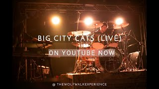 Big City Cats (live)