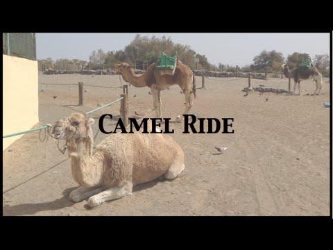Camel Ride through Sand Dunes