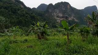 Over 10 Rai of Land for Sale with Rubber Plantation in Khao Thong, Krabi