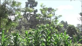 Eco Journal; Residents of Nyeri transforms bare land to a forest