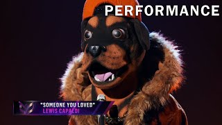 "Rottweiler sings ""Someone You Loved"" by Lewis Capaldi 