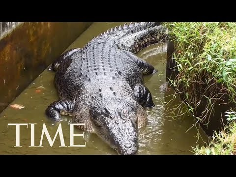 A Woman Was Mauled To Death By A Pet Crocodile In Indonesia | TIME