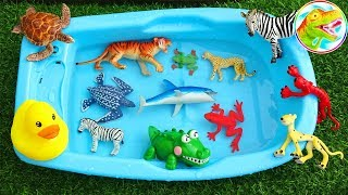 Learn the lovely animals in nature - I80M ToyTV children's toys