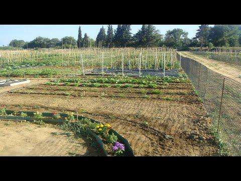 ΑΠΘ: Γίνε καλλιεργητής σε λαχανόκηπους του Πανεπιστημίου ΕΡΤ 17/03/2021