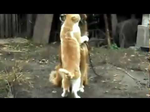 Дружба, дружба между животными или любовь!