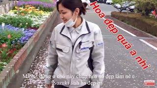VLOG | Cuộc Sống Nhật Bản : Đi Làm Với Nữ Kỹ Sư Nhật Bản ... Hai đứa TRỐN VIỆC đi ngắm hoa :))