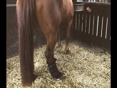 Meine Erfahrung mit den Back on Track Stallgamaschen | AQL Equestrian