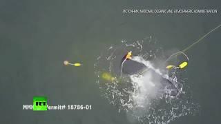 У берегов Калифорнии кит поблагодарил людей за спасение