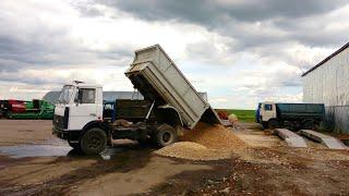 Возим щебень на МАЗ-5551 и ЗИЛ-4506. Ремонт сцепления на Т-150К-09-25 (77-День 3-Сезона)