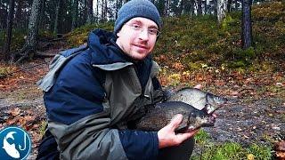 Северо запад ловля леща ноябрь