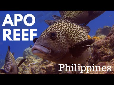 Apo Reef - Diving in the Philippines 2016