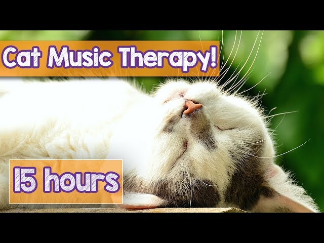 PET MUSIC THERAPY for Cats, Natural Remedy to Anxiety and Loneliness. De-Stress and Relax Cats!