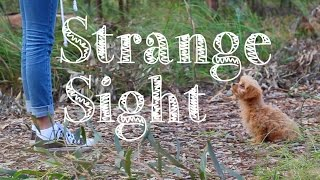 Strange Sight - (Music Video)