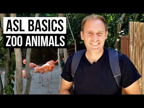 Learn 17 ASL signs for Zoo Animals | Sign Language for Beginners