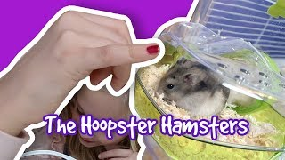 How To Set Up A Zolux Rody Lounge Hamsters Cage   Trio Kiwi   The Hoopsters