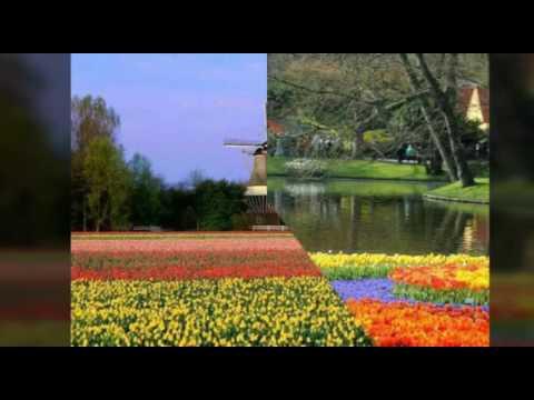Los bellos jardines de Keukenhof, Holanda.