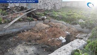 Жители Новгородского района пожаловались на неприятный запах от трупов свиней