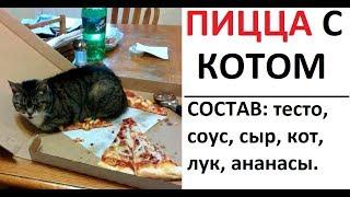 Лютые приколы. Состав пиццы - тесто, кот, соус, лук, ананасы.