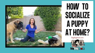 How to Socialize Your Puppy at Home While Social Distancing - 15 Creative Ways (THAT WORK!)