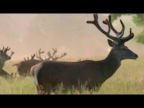 Richmond Park National Nature Reserve - short version