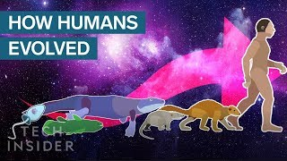 Incredible Animation Shows How Humans Evolved From Early Life