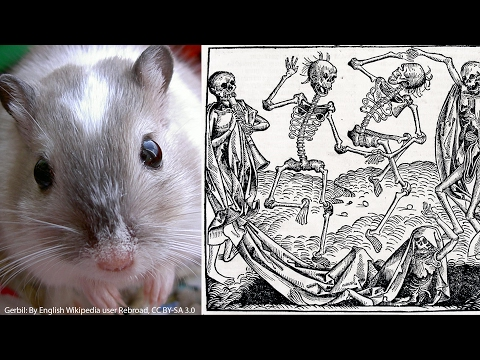 Video Did rats really cause the Black Death?