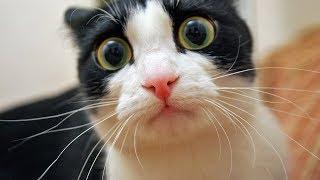СМЕШНЫЕ КОТЫ С ОЗВУЧКОЙ – Лютые приколы с котами и кошками 2019 (Смешные кошки, прикольные мемы)