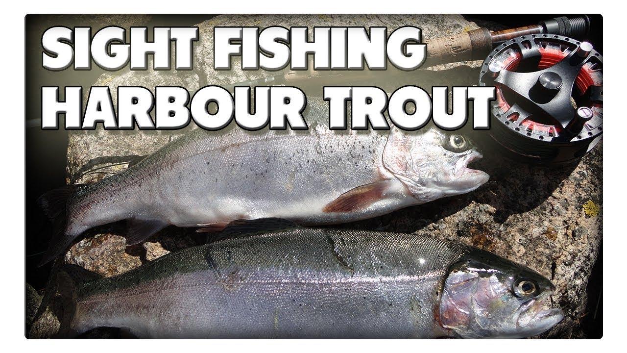 Sight fishing auf Hafen-Forellen