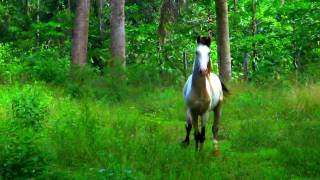Client Testimonials for Mountain Equestrian Trails, Belize