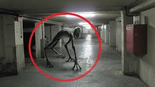 Scariest Creatures Caught On Tape