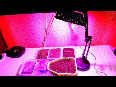 Фитолампа для выращивания растений MING&BEN / Phytolamp for growing plants MING & BEN